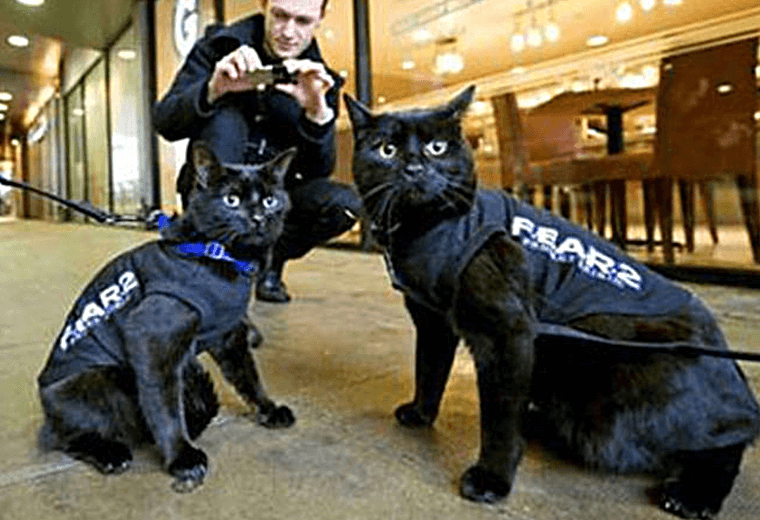 Black cats wearing F.E.A.R. 2 coats