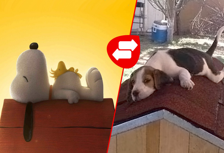 Cartoon dogs and their real-life counterparts