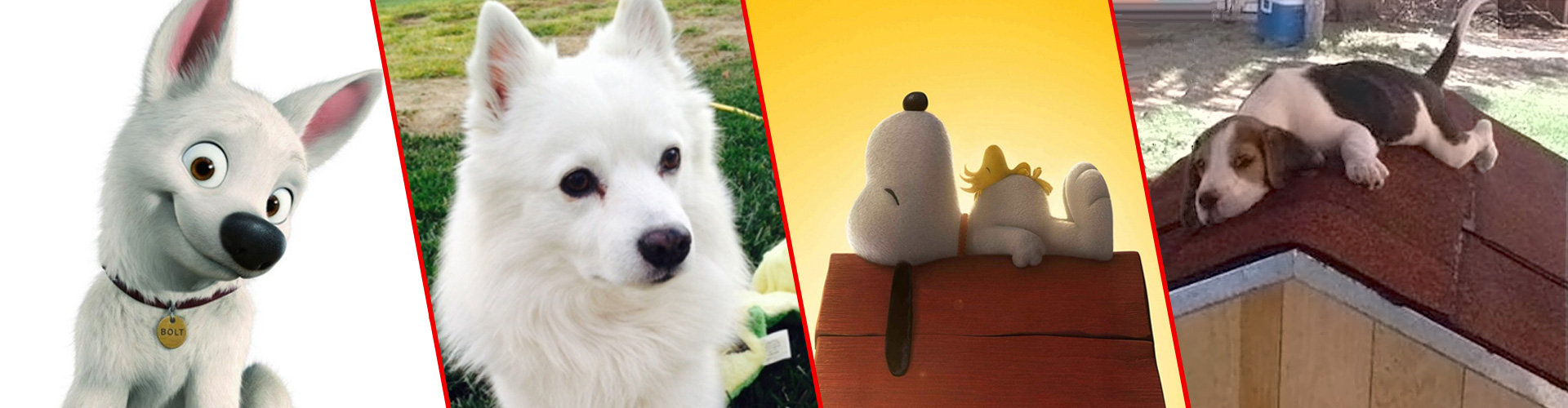 Cartoon dogs & their real-life counterparts