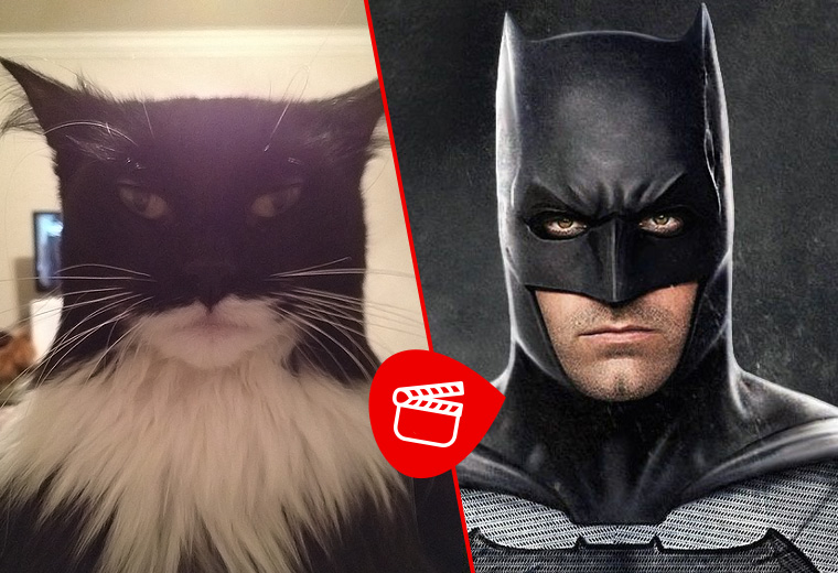 10 cats that look like movie characters