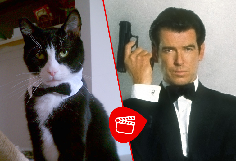 Cats that look like movie characters