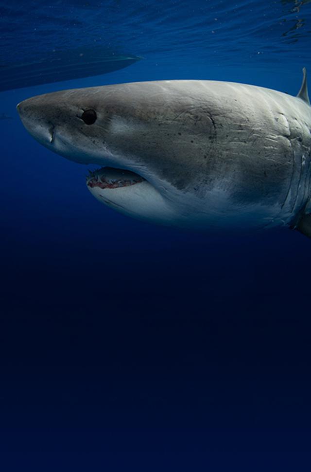 shark week 2020 - photo #8