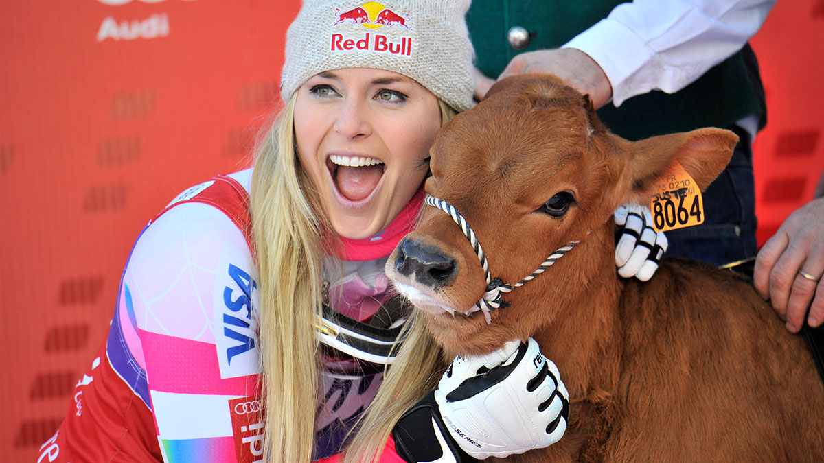 Lindsey Vonn with a cow